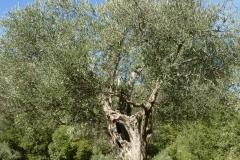 GENTILE-DELLAQUILA-PETTORANO-S.G.-1